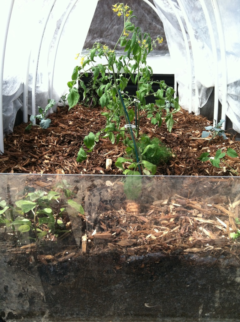 The Garden Truck was inspired by Truck Farm a project in Brooklyn that planted a garden in the back of a truck and then invited others to reproduce the project. Working with the Ag departmet, ESSO, the OASIS club and the art department, we were able to plant a NMSU truck with a hoop house and a few other water saving features.